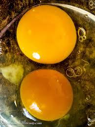 our little coop farm fresh eggs vs store bought eggs