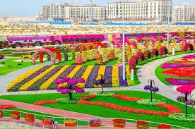 dubai miracle garden world u0027s largest natural flower garden