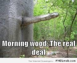 Morning Wood Meme - 15 morning wood real deal pmslweb