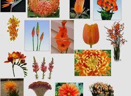 wedding flowers list wedding flower list new orange colored flowers readily available