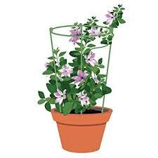 houseplant trellis amazon com mini trellis 7 inch dia garden trellis plant