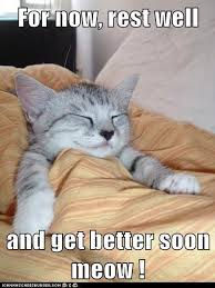 get well soon cat meme well best of the funny meme
