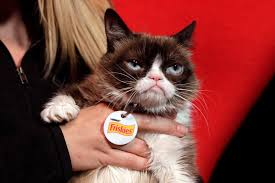 grumpy cat counts down to the new year with top pet peeves