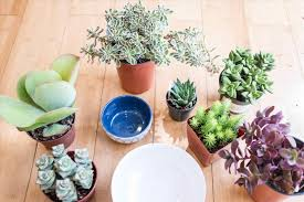 hanging plants indoor succulent darxxidecom