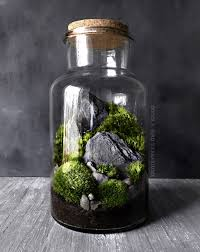 woodland moss and fern terrarium in large glass jar by