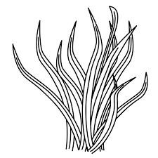 extremely creative ocean plants coloring pages ocean plants