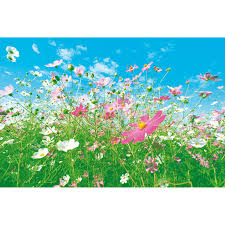 Wall Mural Forest Sunrise Wall Meadow Wall Mural