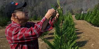 knoxville and regional christmas tree farms opening for the season