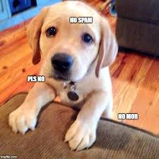 Puppy Eyes Meme - puppy dog eyes meme generator imgflip