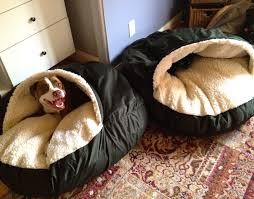 Cedar Dog Bed Cra Cra For Cozy Caves The Unexamined Dog