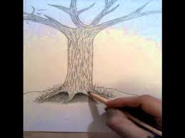 how to draw a realistic looking tree with drawing
