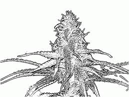 14 pics of trippy weed coloring book pages weed coloring pages