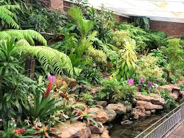 the orchid house at durban u0027s botanic gardens south africa