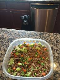 Decorative Dog Food Storage Containers Best 25 Dog Food Containers Ideas On Pinterest Dog Food Bin