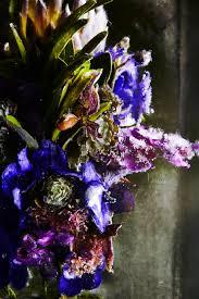 Flowers By Violet - art sheep features u201ciced flowers u201d by makoto azuma art sheep