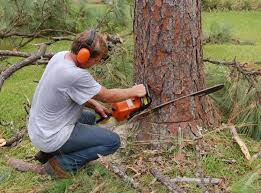 tree service land clearing fredericksburg