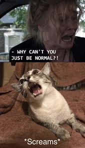 Normal Meme - meowbadook why can t you just be normal know your meme