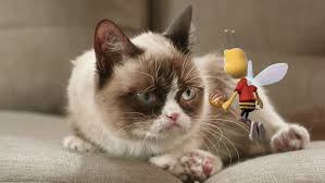 Grumpy Cat No Meme - ad of the day grumpy cat gets stung by the honey nut cheerios
