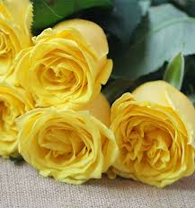flowers in bulk fresh cut bulk flowers wholesale bulk flower suppliers alibaba