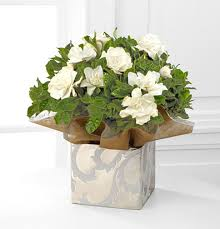 gardenia flower delivery gift size holiday gardenia plant next day flower delivery