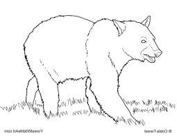 forest wildlife art coloring book page for black bear 492583