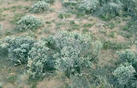 Colorado vegetaion images Plants and trees jpg