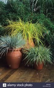 hton court 1995 design geoffrey whiten ornamental grasses in