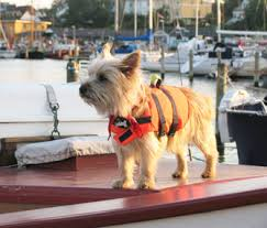 boating with dogs 9 safety tips