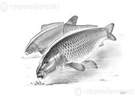heads down underwater carp fishing art drawing print gift for carp