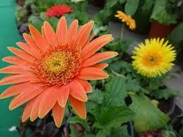 file beautiful flowers 1 jpg wikimedia commons