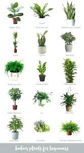 indoor trees that don t need light indoor plants that don t need sunlight unique indoor plants that do