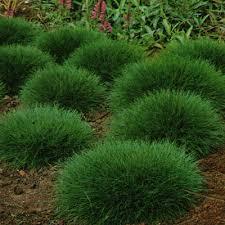 giardini rocciosi in ombra soluzioni alternative al manto erboso nel prato in ombra