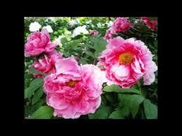 the best garden flowers names 2016 youtube