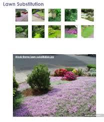 Backyard Ground Cover Options 73 Best Garden Stepables Images On Pinterest Gardening Ground