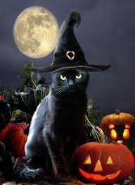 black cat wallpaper wallpapers browse black cat halloween