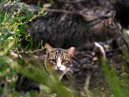 How To Keep Cats Out Of Your Backyard How To Keep Cats And Critters Out Of Your Yard U2013 The Mercury News