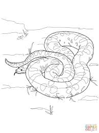 anaconda coloring page green anaconda coloring page free printable