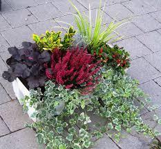 winterharte pflanzen balkon pflanzen set für balkonbepflanzung 80 cm pflanzen versand