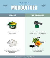 Mosquito Spray For Backyard by 7 Ways To Get Rid Of Mosquitoes In Your Home Or Yard