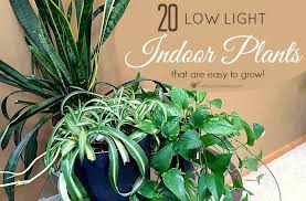 Plants Easy To Grow Indoors Low Light Indoor Plant List 20 Houseplants That Are Easy To Grow