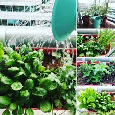 vancouver balcony gardening tips and tricks