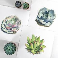 mexican horseshoes 24 best succulents cacti horseshoes images on