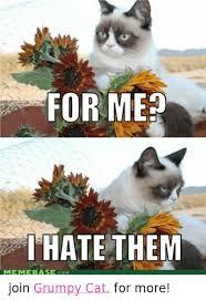 Grumpy Cat Coma Meme - 25 best memes about grumpy cat meme grumpy cat memes