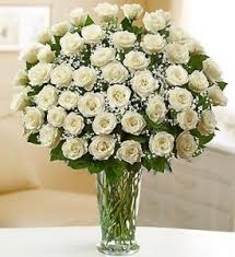 3 dozen roses amazing alabaster 3 dozen white roses in palm fl flowers