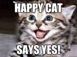 Happy Cat Meme - happy cat says yes happy cat quickmeme