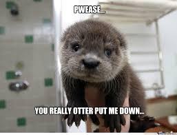 Otter Meme - otter by fluttershy meme center