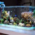 Aquarium Decor Ideas Unique Fish Tank Decorations Cool Diy Aquarium Decor Ideas Youtube