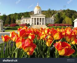 tulips vermont state house stock photo 58009048 shutterstock