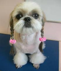 Dog Grooming Styles Haircuts Dogs With Human Hairstyles Slapped Ham