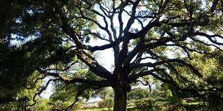 pacific slope tree cooperative
